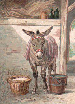 L'âne de Buridan : choisir sans renoncer !