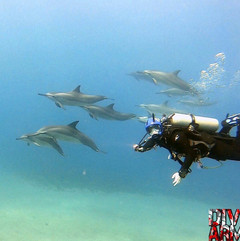 Swimming with spinner dolphin