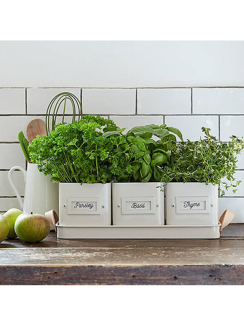 Burgon & Bloom Herb Pots Set - Stone