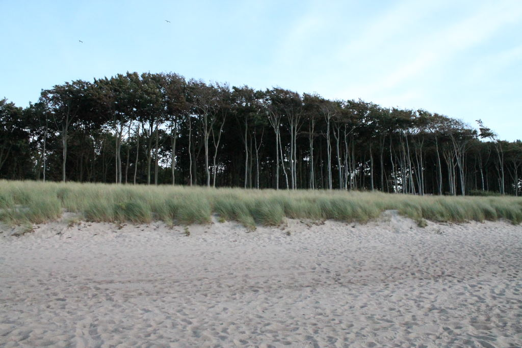 08 Wald am Strand