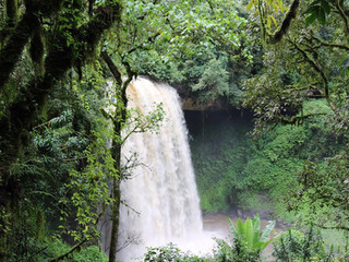 Sheka Forest Biosphere Reserve