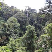 Deep in Keffa Forest