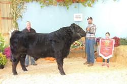 Grand Champion Bull Erin Fall Fair