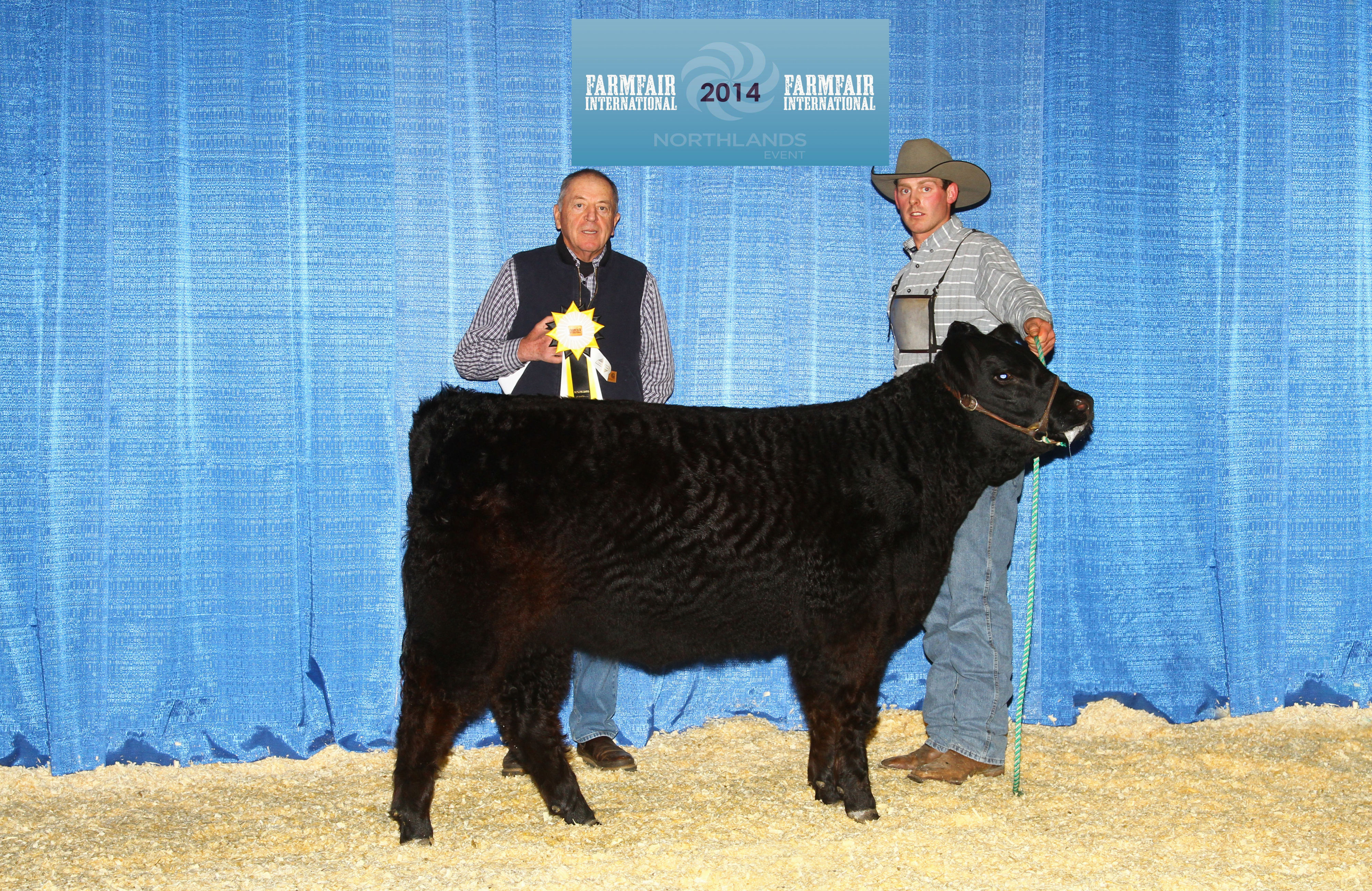 Champion Heifer calf