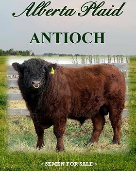 Antioch Catalogue (2).jpg