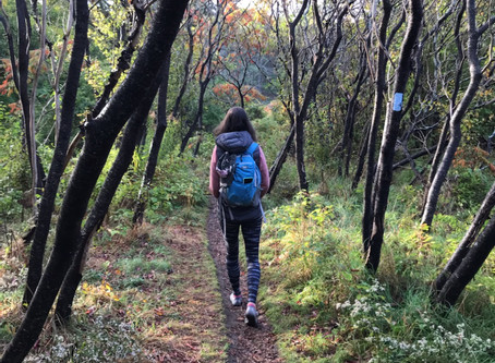 The Great Outdoors and its Health Benefits
