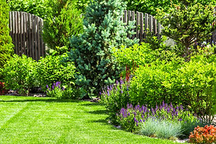 A-flower-garden-in-the-backyard-98055365