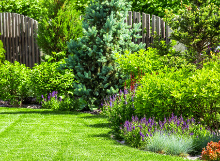 25% Off Lawn Renovations