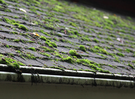 25% OFF Gutter and Moss Cleaning