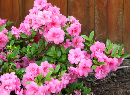 25% OFF Ornamental and Fruit Tree Pruning