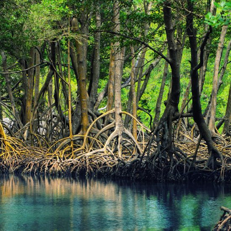 manglares.jpeg