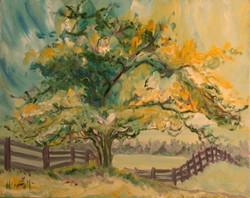 Summer Hawthorn Tree II - 2007