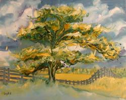Summer Hawthorn Tree I - 2007