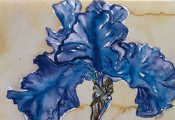 Naples Blue Iris II