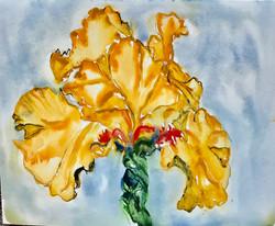 Yellow Iris I