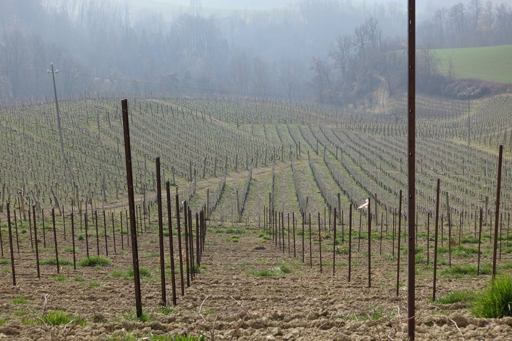 Rolling hills of the Langhe