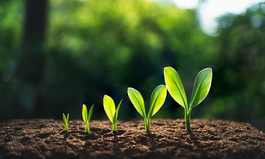 11-Spiritual.Growth-bigstock-305123461.m