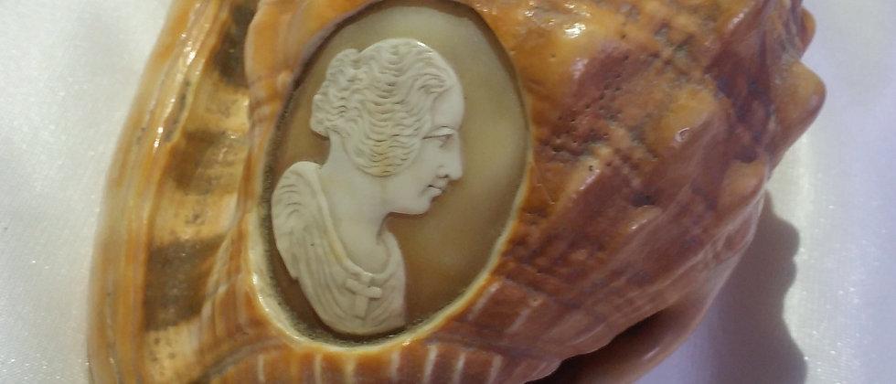 Italian Cameo Shell Conch Circa 1860