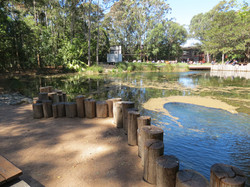 UOW Duck pond