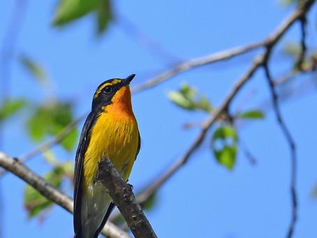 最近の鳥見