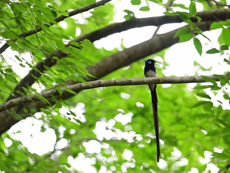 2日の鳥見