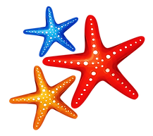 Starfish Picture.png