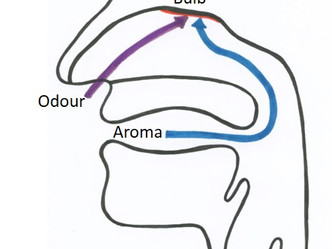 Odour and Aroma – Defining Olfaction from a Sensory Perspective.