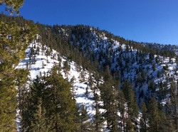 Snow in Angeles National Forest