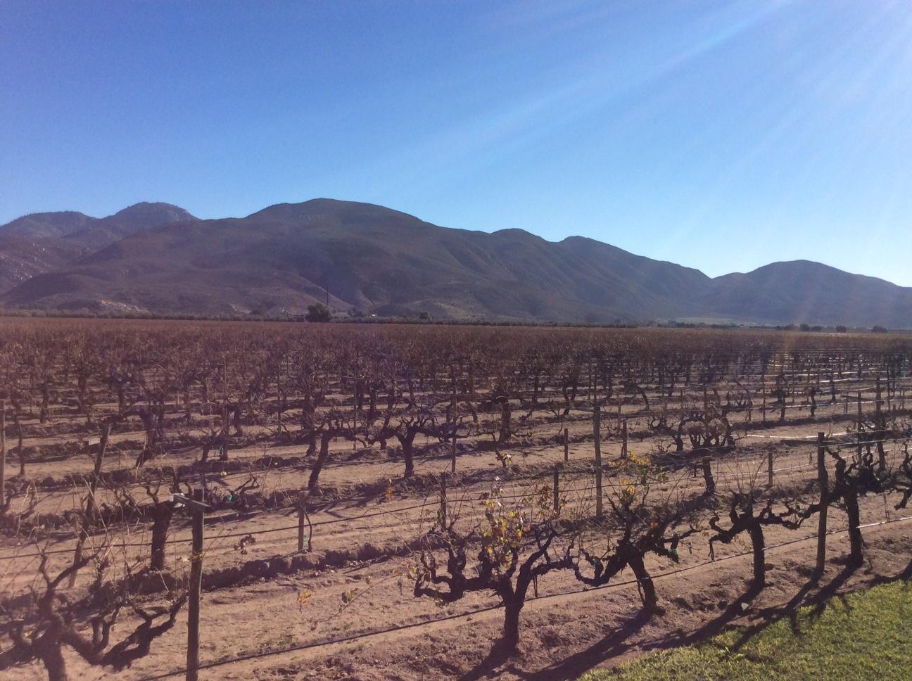 La Esperanza Vineyard