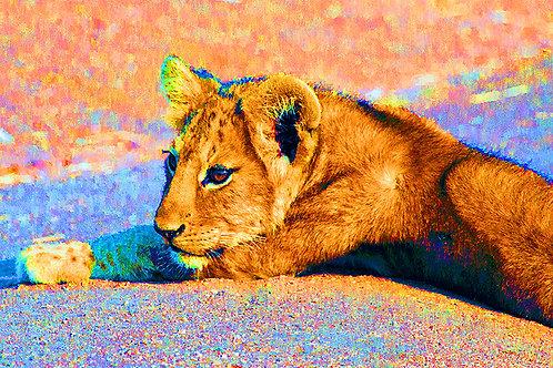 Rainbow Cub