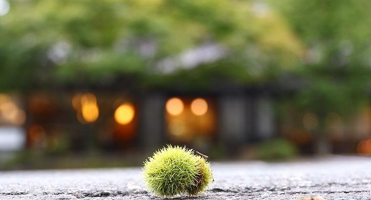 akinosato - コピー.jpg