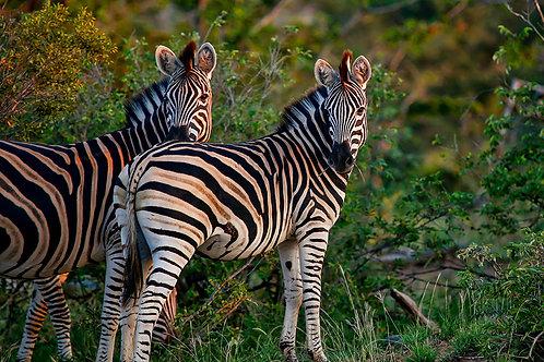 Morning Stripes