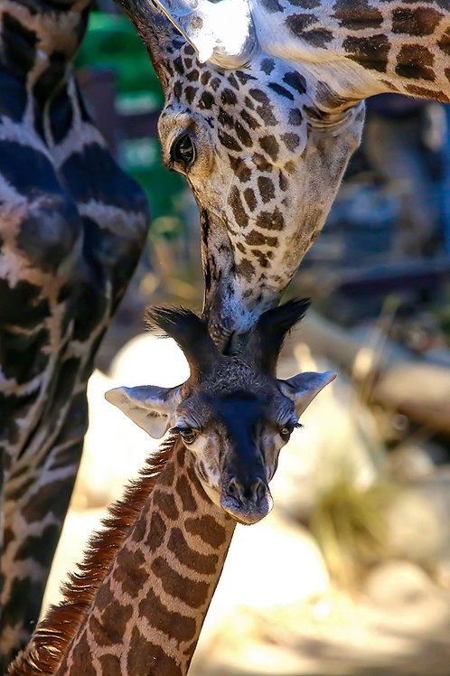 A Kiss From Mom