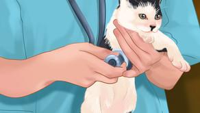 ВЛК или вирусный лейкоз кошек