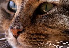 Коты-телепаты