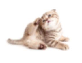 catitching.jpg
