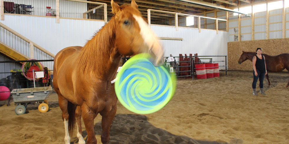 Equine Assisted Learning Certification Demo June 29