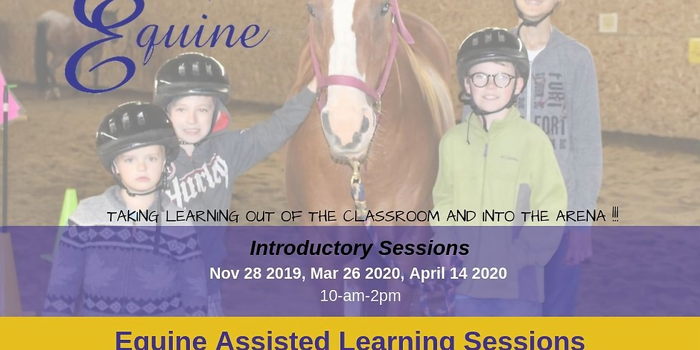 Introductory into Equine Assisted Learning Sessions