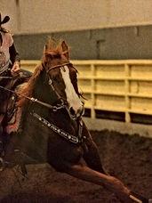 Horton Exceptional Equine