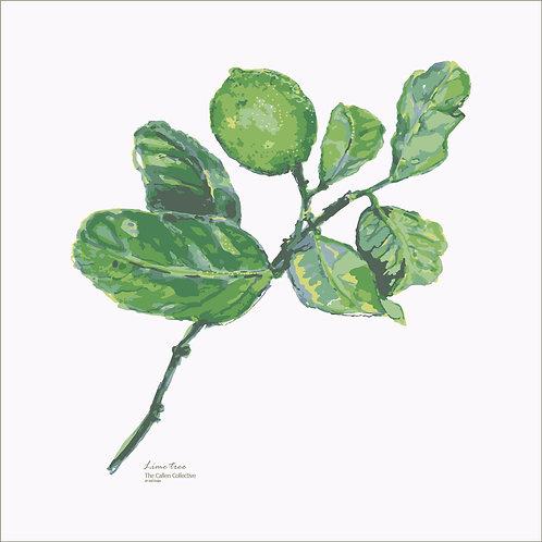 Lime Tree Art Print