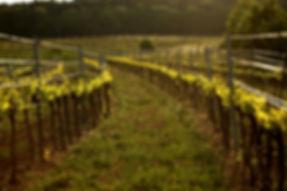 Riede Schönkirchen Weingut Österreicher aus Pfaffstätten