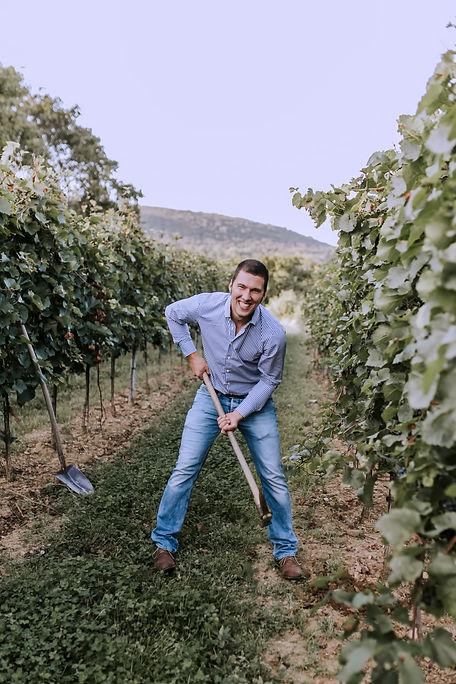 Stefan im Weingarten Weingut Österreicher aus Pfaffstätten