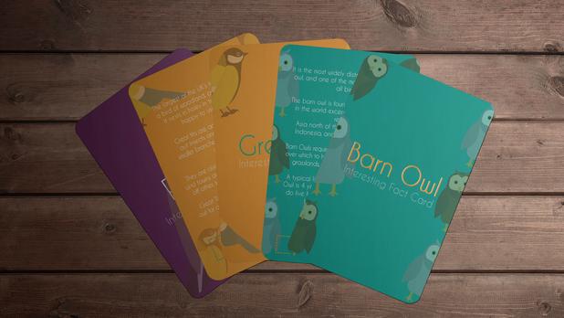 Bird Fact Cards