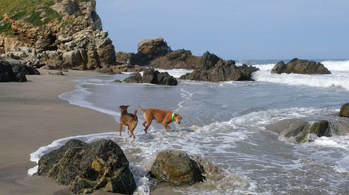 Even the dogs love low tide