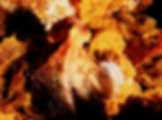 madeira polpo e cavalluccio.jpg