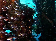 relitto basi pesci vetro.jpg