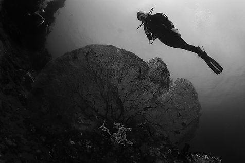subacquea.jpg