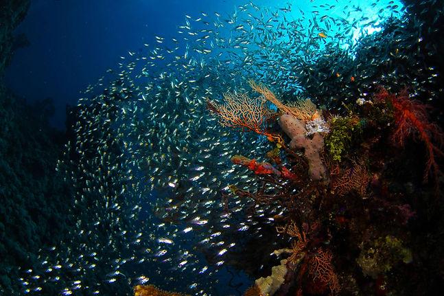 vetro e corallo.jpg