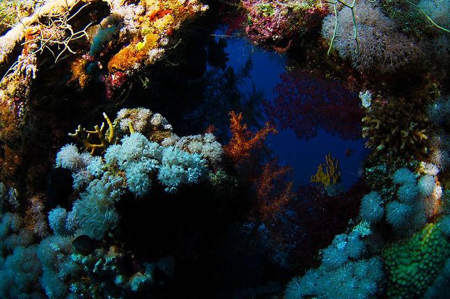 oblo' nel reef.jpg