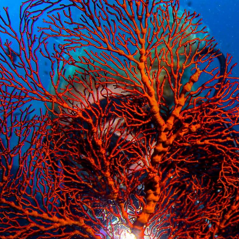 23.6.19 Immersioni Deep alle secche di Vado